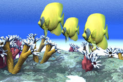 Humores coralinos Imagen de archivo