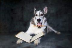 Humoristiskt uttryck på en hund som rymmer en blyertspenna Royaltyfri Fotografi