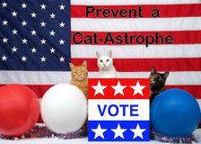 Humorous election poster with diverse cats in front of american flag. 3 unique diverse cats sitting behind an election ballot box with VOTE on the front, red stock images