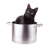 Humorous image of a black cat sitting in a large sauce pot Royalty Free Stock Photos
