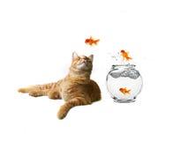 Humorvolles Bild des Katze-Überwachens Lizenzfreie Stockfotografie