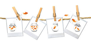 Humous Image of Goldfish Jumping Around stock photos