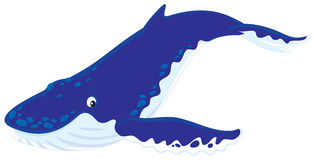 Hump-backed whale. Vector clip-art illustration of a diving hunchbacked whale Royalty Free Stock Photo