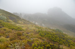Hump Ridge In The Fog Royalty Free Stock Photography