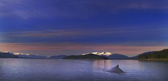 humpback μοναξιά Στοκ Εικόνα
