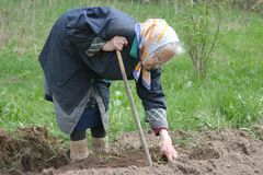 Humpback. 80-90 years old woman working at her garden, real situation picture Stock Photo