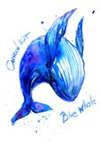 Humpback Blue whale watercolor illustration. Underwater fauna. name in English, Russian. Blue whale watercolor. Underwater fauna royalty free stock photography