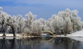 Humpback bridge over the river bay among large trees in frost. Walk along the river clear frosty morning led to a humpbacked bridge through the river bay among royalty free stock image