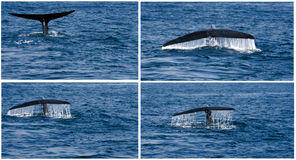 Humpback fin whale on the sea. Water stock photography