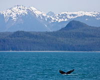 Humpback and Mountains Stock Photo