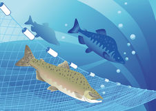 Humpback salmon fish and fishing nets. On the sea background Royalty Free Stock Photos