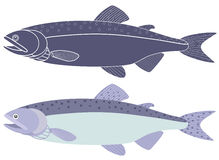 Humpback salmon. Vector illustration (EPS 10 Royalty Free Stock Photo