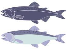 Humpback salmon Royalty Free Stock Photo