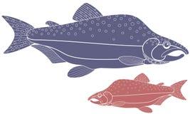 Humpback salmon Stock Photos