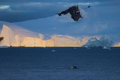 Humpback whale, Antarctic peninsula. Humpback whale in front of mountains, Antarctic peninsula Stock Photo