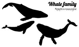 Humpback whale black silhouette. The family of whales with their calf. Megaptera novaeangliae. Vector. Silhouette Stock Photo