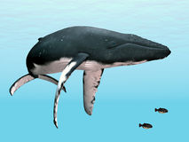 Humpback Whale. Computer generated 3D illustration with a Humpback Whale Royalty Free Stock Image