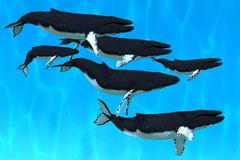 Humpback Whale Family Stock Images