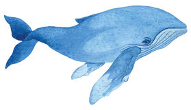 Humpback whale. Hand drawn watercolor  illustration Royalty Free Stock Photos