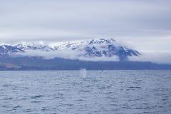 Humpback whale. Near Husavik bay, Iceland Stock Photo
