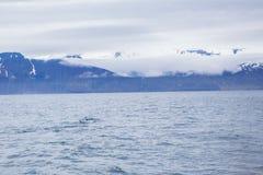 Humpback whale. Near Husavik bay, Iceland Royalty Free Stock Image