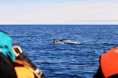 Humpback whale, Iceland. Whale watching near Husavik - tail fin of humpback whale, Iceland royalty free stock photos