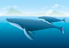 Humpback Whale mother and young on surface. Landscape with ocean and island with Humpback Whale mother and young whale swimming on surface Stock Image