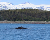 Humpback whale with mountains Stock Image
