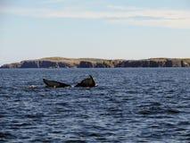 Humpback whale submerging off the coast of Bonavista. Newfoundland, Canada stock photo