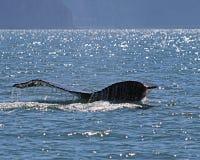 Humpback whale tail Alaska Royalty Free Stock Photos