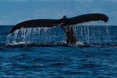 Humpback whale tail fluke near Lahaina in Hawaii. Hawaii, Maui, Lahaina, Winter stock photo