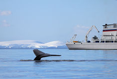Humpback whale tail with ship, boat Royalty Free Stock Photos