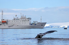 Humpback whale tail with ship, boat Royalty Free Stock Images