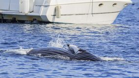Humpback Whale watching. In Los Angeles stock photos