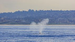 Humpback Whale watching. In Los Angeles stock photo