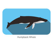 Humpback Whales swimming in the sea, animal flat icon. Vector illustration Royalty Free Stock Photo