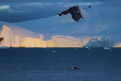 Humpback wieloryb, Antarktyczny półwysep zdjęcie stock