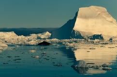 Humpback wieloryb wśród gór lodowych w Ilulissat icefjord, zachodni Greenland fotografia royalty free