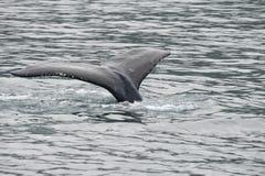 Humpback wieloryb w Alaska fotografia royalty free