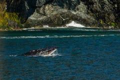 Humpback wieloryb w książe William dźwięku w Alaska obrazy stock
