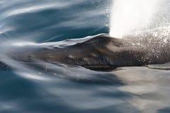 Humpback wieloryba ciosu dziura - Greenland zdjęcia royalty free