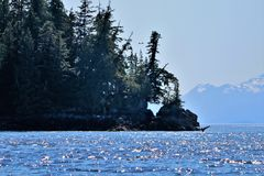 Humpback wieloryba falowanie w Alaska do widzenia zdjęcie royalty free