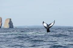 Humpback wieloryba ogon obrazy stock
