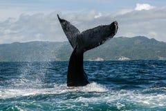 Humpback wieloryba ogon Obraz Stock