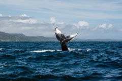 Humpback wieloryba ogon Obrazy Royalty Free