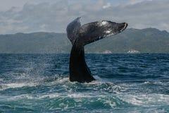 Humpback wieloryba ogon Fotografia Royalty Free