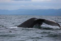 Humpback wieloryba ogon Zdjęcie Stock