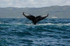Humpback wieloryba ogon Fotografia Stock