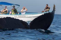 Humpback wieloryba ogon i turysta łódź Obrazy Stock