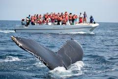 Humpback wieloryba ogon w Samana, republice dominikańskiej i torist wha, zdjęcia royalty free